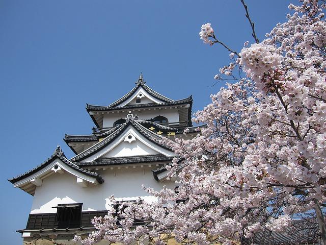 Templo budista junto árbol sakura